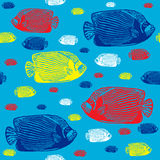 Emperor angelfish colourful seamless  pattern. Realistic engraved colourful style of fishes on blue background Stock Images
