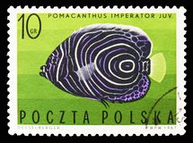 Emperor Angelfish Pomacanthus imperator Juvenile, circa 1967. MOSCOW, RUSSIA - SEPTEMBER 15, 2018: A stamp printed in Poland shows Emperor Angelfish Pomacanthus royalty free stock images