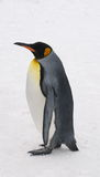 Emperor penguin Stock Photography