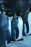 Emperor penguin,New Zealand Stock Photos