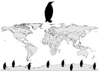 Emperor penguin range. Detailed and colorful illustration of emperor penguin range royalty free illustration