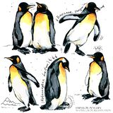 Emperor penguin set watercolor illustration. Emperor penguin watercolor illustration. wild polar animal stock illustration