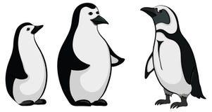 Emperor penguins. Antarctic black and white emperor penguins on white background royalty free illustration