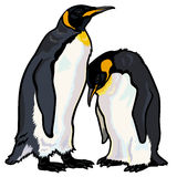 Emperor penguins. Aptenodytes frosteri,image isolated on white background Royalty Free Stock Photos