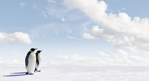 Emperor penguins in Antarctica Stock Photo