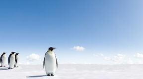 Emperor Penguins in Antarctica. Scenic view of group of Emperor Penguins walking on snowy landscape of Antarctica royalty free stock photos