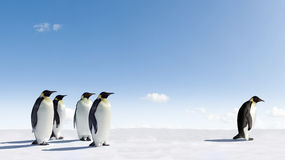 Emperor Penguins in Antarctica Stock Images