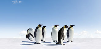 Emperor penguins in Antarctica Royalty Free Stock Photography