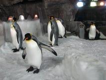 Emperor penguins in aquarium. Stock Photo