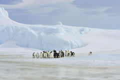 Emperor Penguins with chick Royalty Free Stock Photography