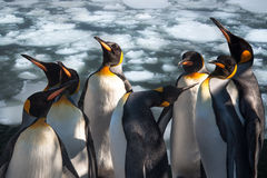 Emperor penguins Stock Photo