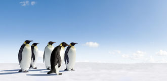 Emperor Penguins in snow scene Stock Image