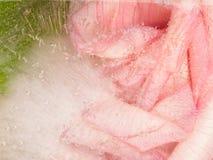 Empfindliche aromatische organische Abstraktion Stockbild