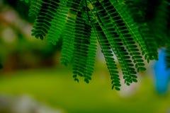 Empfindliche Blätter stockfoto