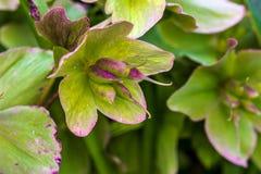 Empfindliche Blüte Lizenzfreies Stockbild