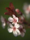 Empfindliche Blume stockbilder