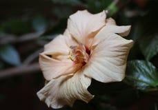 Empfindliche Blume in der Dunkelheit stockbilder