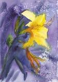 empfindliche Blume, Lilie, schöne helle Aquarellflecke, blaue abstrakte Aquarellbeschaffenheit lizenzfreie stockfotografie