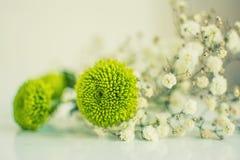 Empfindliche Blumen stockbild