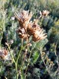 Empfindliche Blumen Lizenzfreie Stockfotografie