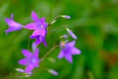 Empfindliche Blumen Stockfotos