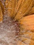 Empfindliche einfarbige Abstraktion mit Blume Stockfotos