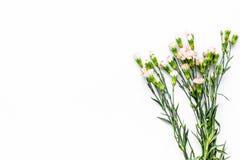 Empfindliche Frühlingsblumen Kleine rosa Gartennelke auf weißem Draufsicht-Kopienraum des Hintergrundes stockfotografie