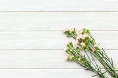 Empfindliche Frühlingsblumen Kleine rosa Gartennelke auf weißem hölzernem Draufsicht-Kopienraum des Hintergrundes stockfotografie