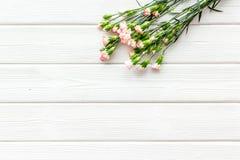 Empfindliche Frühlingsblumen Kleine rosa Gartennelke auf weißem hölzernem Draufsicht-Kopienraum des Hintergrundes lizenzfreie stockbilder