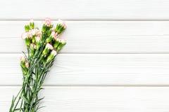 Empfindliche Frühlingsblumen Kleine rosa Gartennelke auf weißem hölzernem Draufsicht-Kopienraum des Hintergrundes lizenzfreies stockfoto