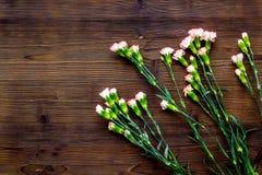 Empfindliche Frühlingsblumen Kleine rosa Gartennelke auf dunklem hölzernem Draufsicht-Kopienraum des Hintergrundes stockfotos
