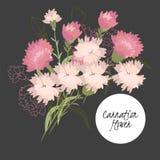 empfindliche Gartennelkenblume der Illustration lizenzfreie abbildung