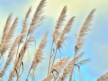 Empfindliche hohe Gr?ser brennen im Wind vor einem zarten blauen Himmel durch lizenzfreie stockbilder