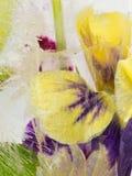 Empfindliche Iris eingefroren im Eis Lizenzfreies Stockbild