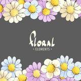 Empfindliche mehrfarbige Gänseblümchen auf einem dunklen Hintergrund Stockfotos