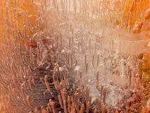 Empfindliche organische Abstraktion mit schönen Blasen Stockfoto