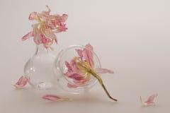 Empfindliche rosa Blumen in einem Klarglasteller mit den zackigen Blumenblättern auf einem empfindlichen wenig rosa Hintergrund,  Lizenzfreies Stockfoto