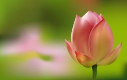 Empfindliche rosa Tulpe auf grünem Hintergrund lizenzfreie abbildung
