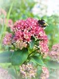 Empfindliche rosafarbene Blumen Lizenzfreie Stockfotografie