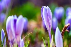 Empfindliche Waldfrühlingsblumen Sch?ner Blumenheiratshintergrund lizenzfreie stockfotografie