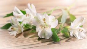 Empfindliche weiße Blumen im warmen Sonnenschein Lizenzfreie Stockbilder