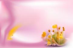 Empfindlicher abstrakter Hintergrund mit einer rosa Orchidee Lizenzfreies Stockfoto