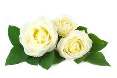 Empfindlicher Blumenstrauß der cremefarbenen Rosen Lizenzfreies Stockbild