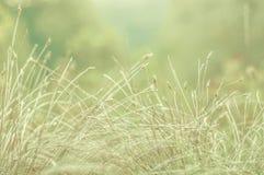 Empfindlicher Hintergrund mit Feldanlagen in einem weichen Licht Weiches gree Lizenzfreie Stockbilder
