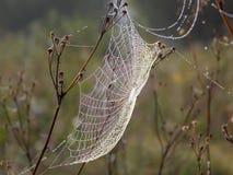 Empfindliches Spinnennetz Lizenzfreies Stockfoto