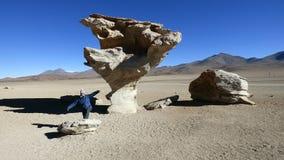 Empiedra el árbol en boliviano Altiplano, Suramérica Fotos de archivo