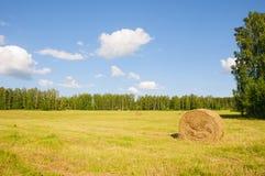 Empilez oh le foin dans le domaine au bord de la forêt Image libre de droits