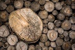 Empilhe a textura do log, fundo natural do corte da madeira Fotografia de Stock