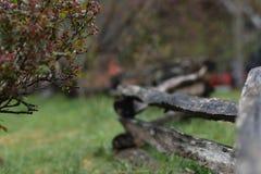 `` Empilhou a cerca empilhada dos locustídeo do trilho rachado do ` appalachian autêntico com o arbusto cor-de-rosa selvagem fotografia de stock