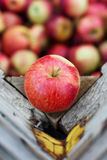 Empire apples Royalty Free Stock Photos